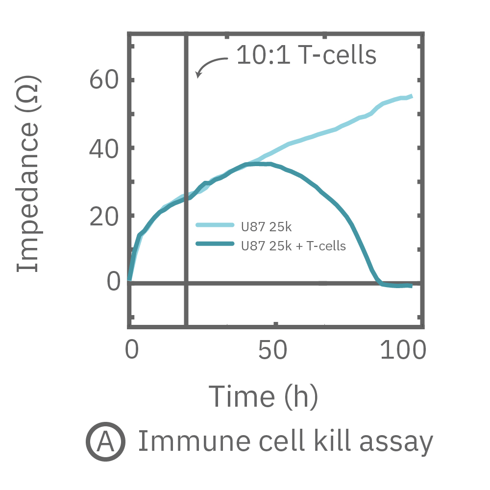 Continuous monitoring of impedance over 24 hours.  The addition of activated T-cells reduced the impedance measurement