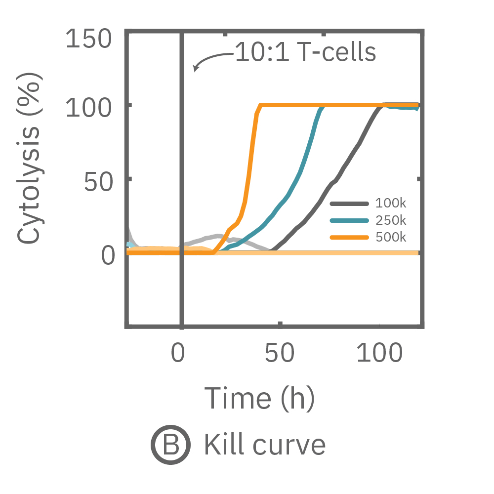 The kill curve for different densities of activated T-cells