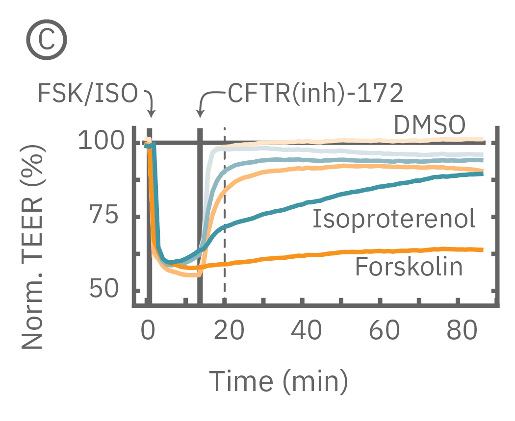 Addition of isproterenol significantly reduced TEER