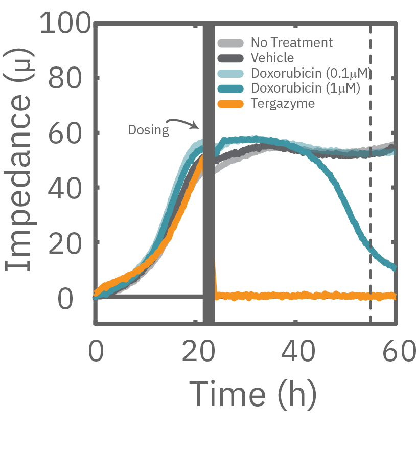 A549 were dosed with Doxorubicin, vehicle (DMSO), or Tergazyme. Wells dosed with Tergazyme showed an immediate decrease in impedance, reflecting complete cell death.