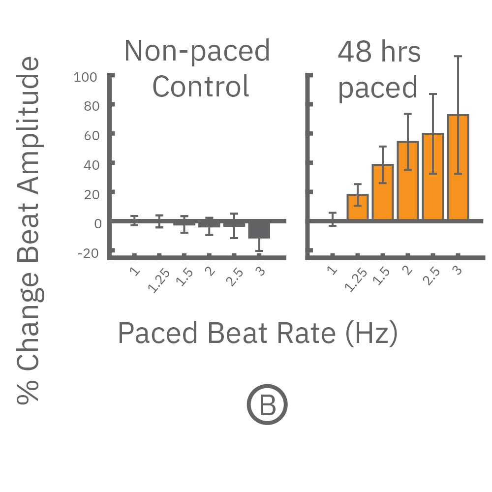Paced cells exhibited a positive force-frequency relationship while non-paced showed a negative relationship