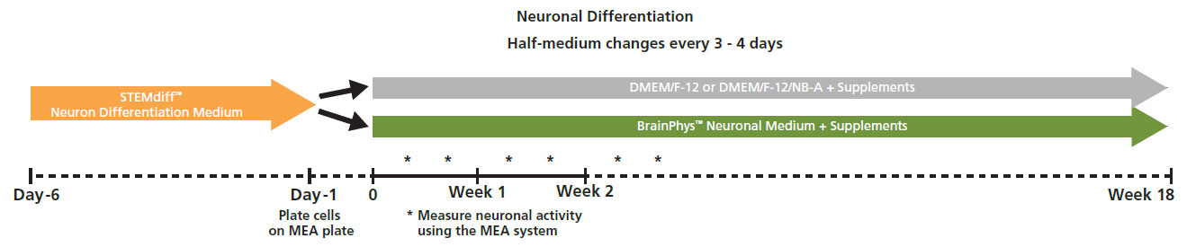 Neuro differentiation protocol