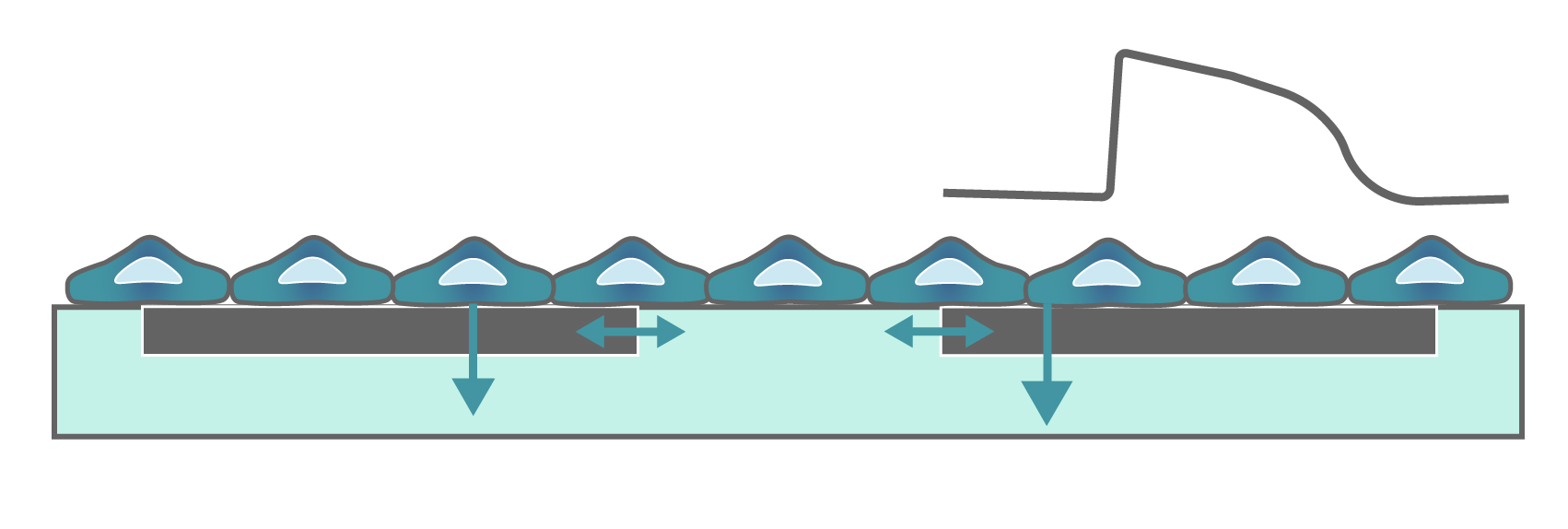 Rendering of cells growing over the electrodes at the bottom of the well