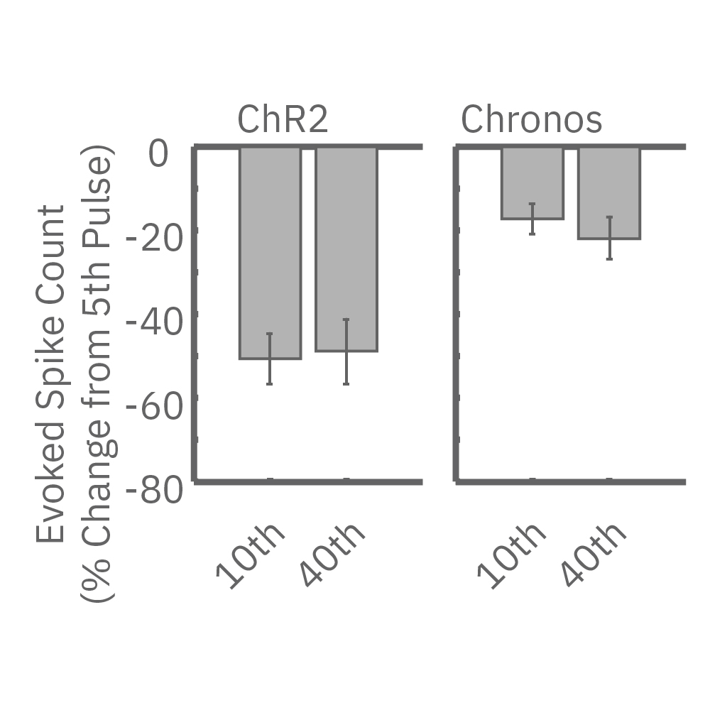 Evoked spike count showed consistent results for ChR2 and Chronos