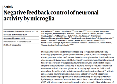 2020 Paper on neuronal activity by microglia with maestro pro