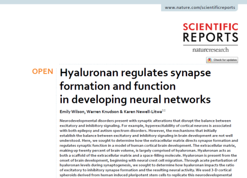 2020 Hyaluronan in neuronal networks and cortical organoids with MEA assay