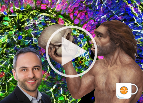 Neanderthal mini-brain video